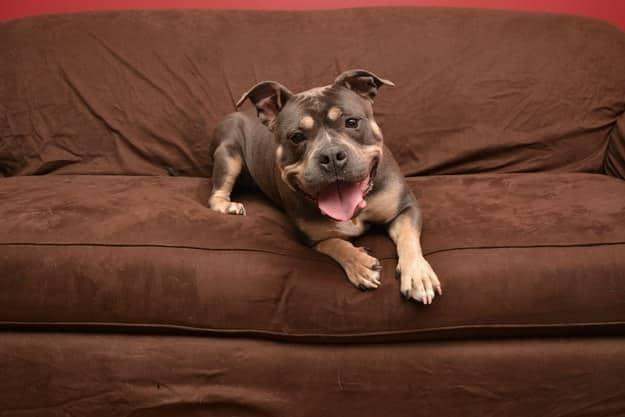 chien meilleur ami 3