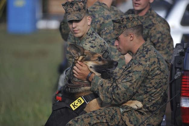 chien meilleur ami 5