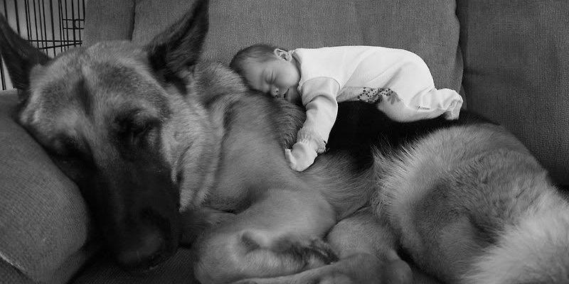 Gros chien bebe fb