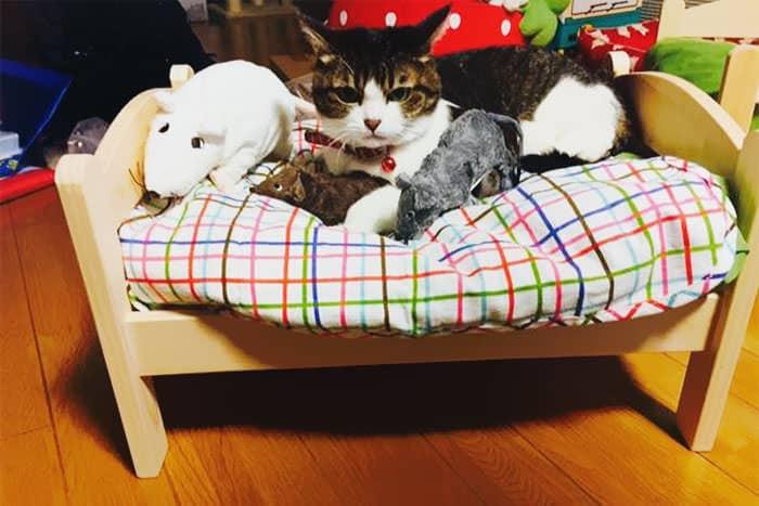 lit ikea pour chat 14