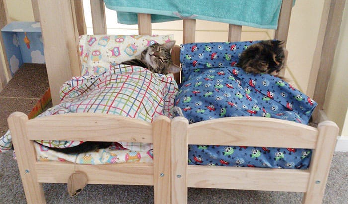 au japon des propri taires de chats transforment un lit de poup e ikea en un adorable lit pour. Black Bedroom Furniture Sets. Home Design Ideas