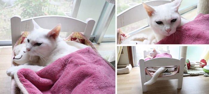 lit ikea pour chat 7
