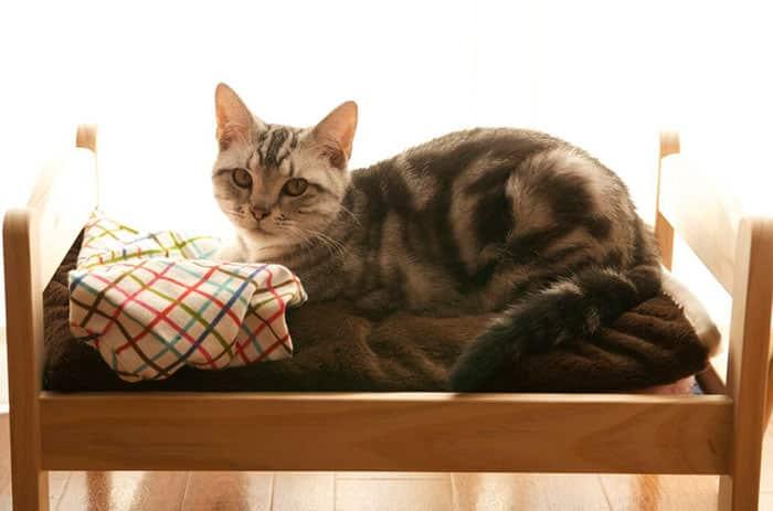 lit ikea pour chat 8
