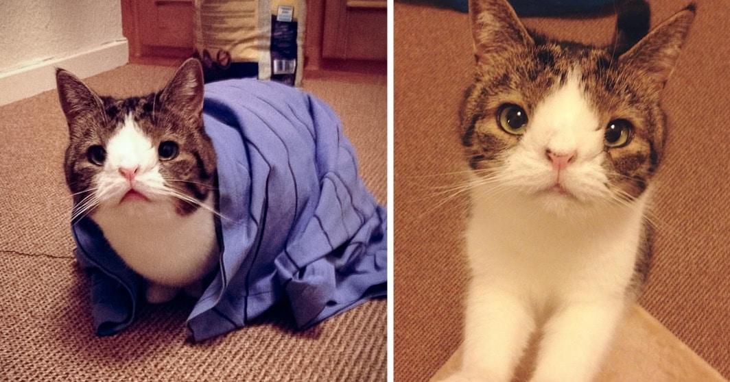Monty le chat fb