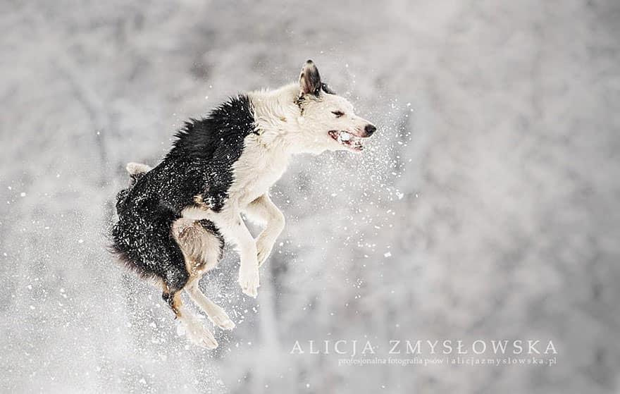 portrait chien 10