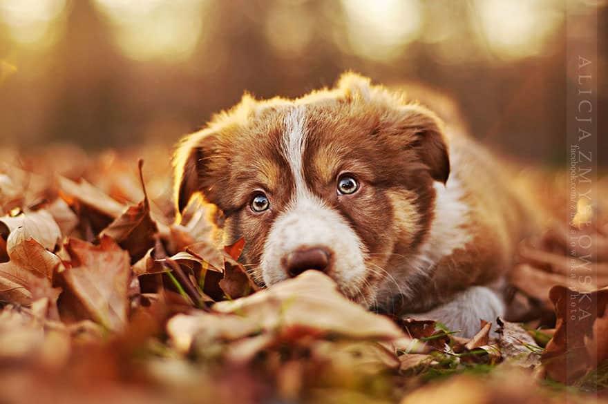 portrait chien 11