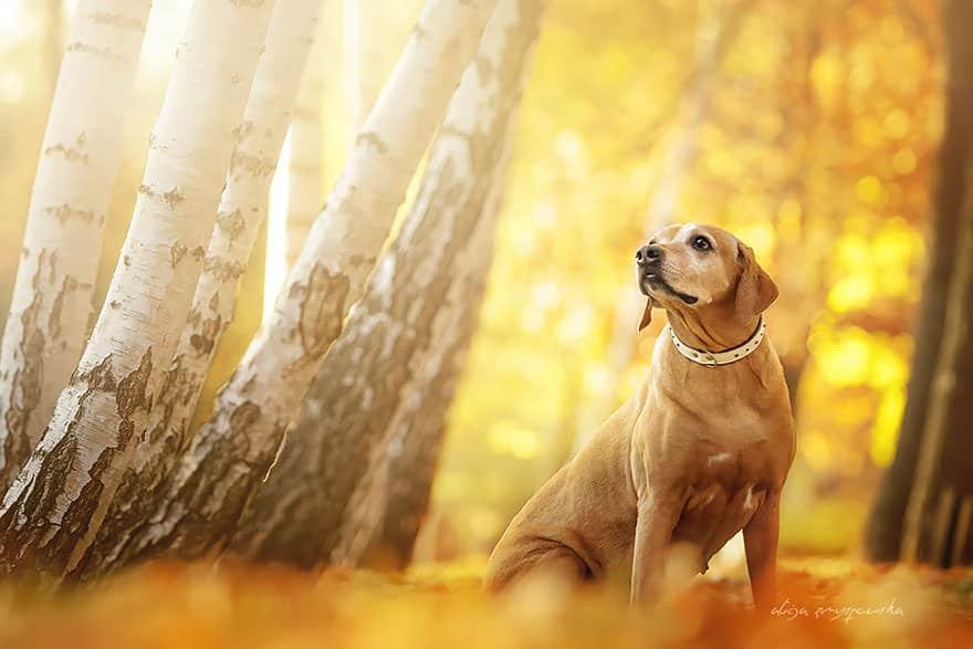 portrait chien 13