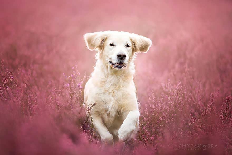 portrait chien 14