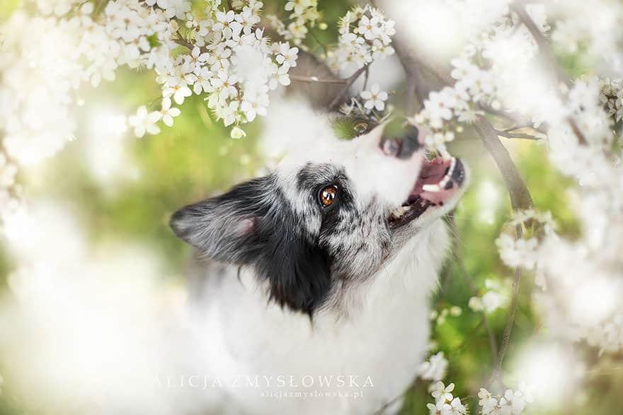 portrait chien 15