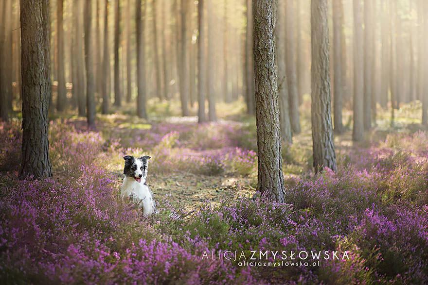 20 portraits attachants de chiens en milieu rural for En milieu rural