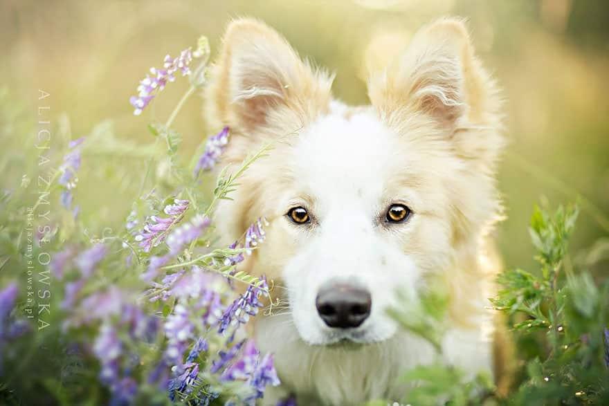 portrait chien 18
