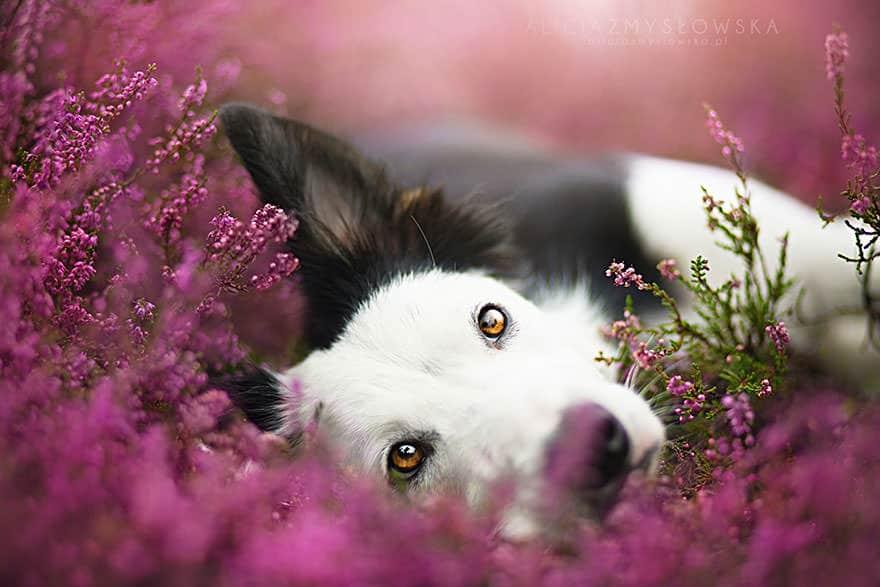 portrait chien 4