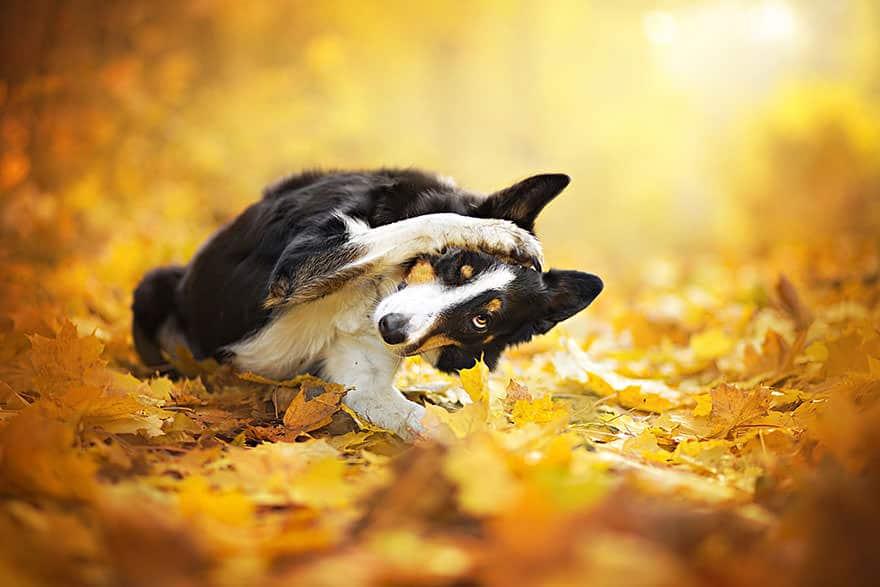 portrait chien 6