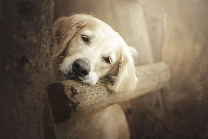 portrait chien 9