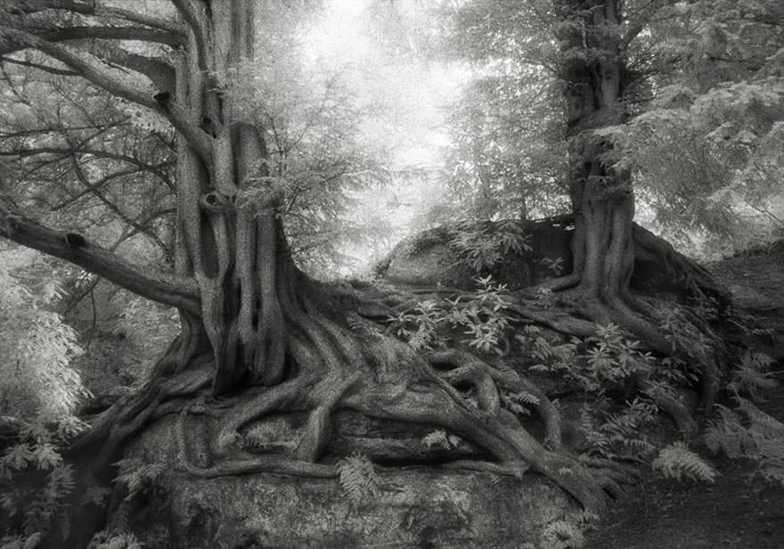 une femme passe 14 ann es de sa vie photographier les arbres les plus vieux du monde le. Black Bedroom Furniture Sets. Home Design Ideas