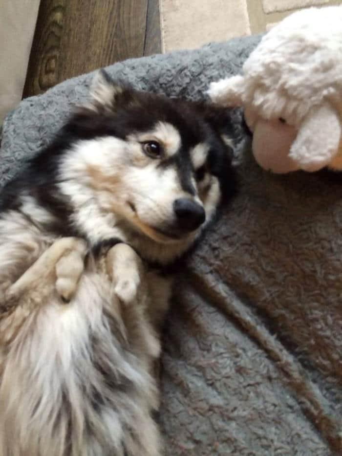 chien pattes deformees 3