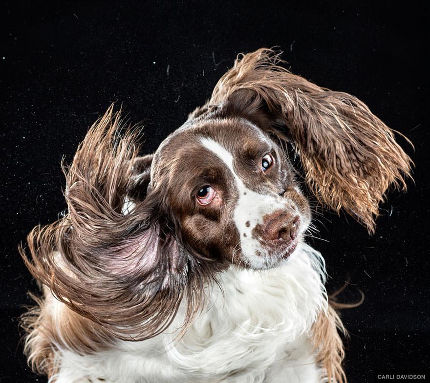 chien secoue la tete au ralenti 11
