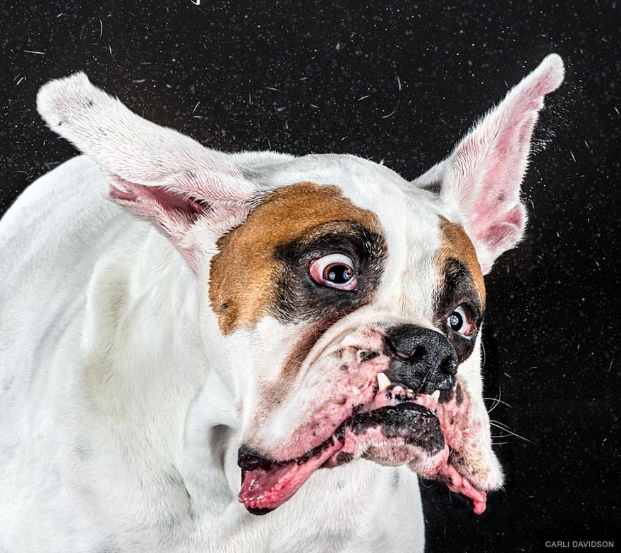 chien secoue la tete au ralenti 3