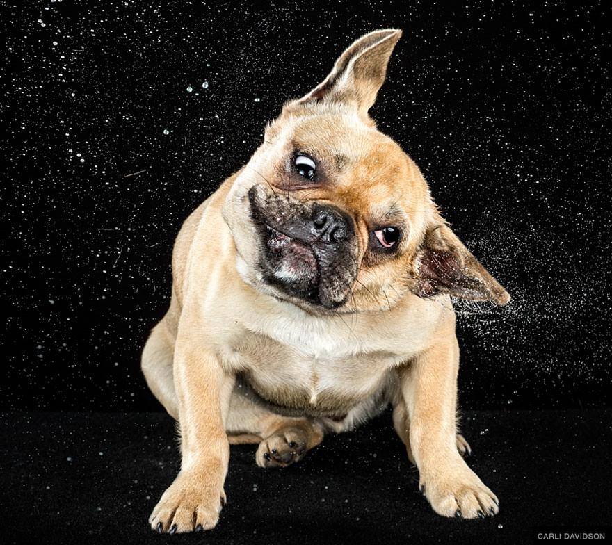 chien secoue la tete au ralenti 6