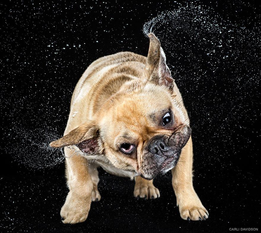 chien secoue la tete au ralenti 7