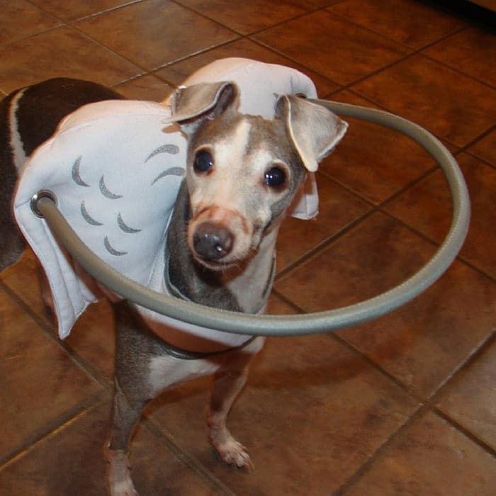 halo chien aveugle 10