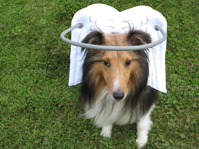 halo chien aveugle 15