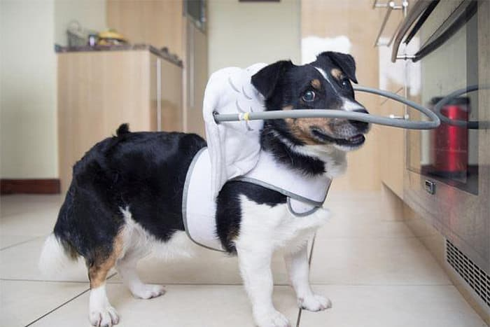 halo chien aveugle 2