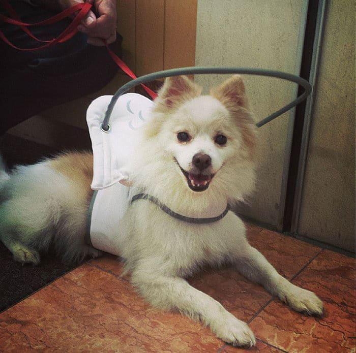 halo chien aveugle 4