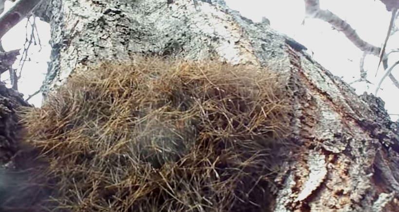 Araignee mousse