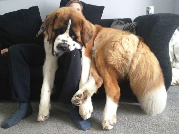 Big dog 03