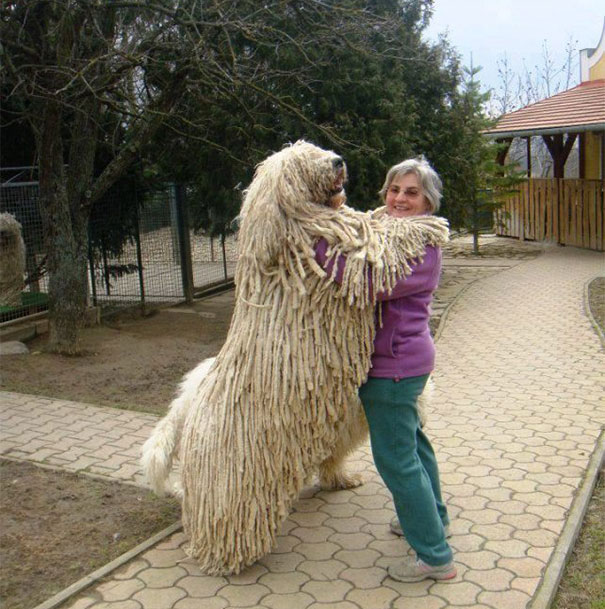 big-dog-06
