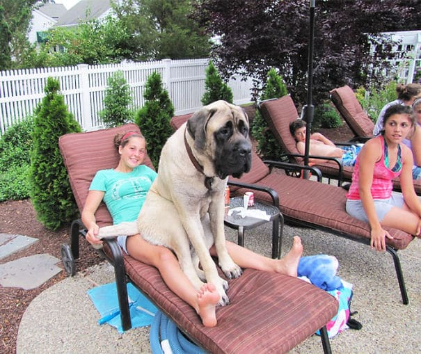 Big dog 10