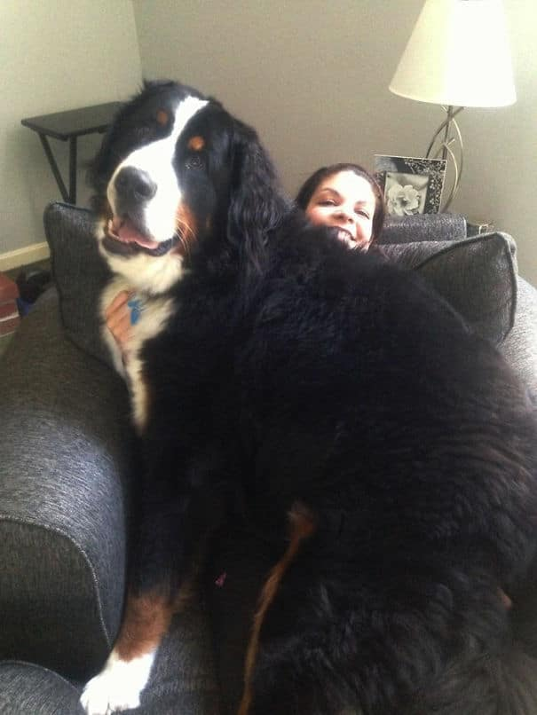 big-dog-11