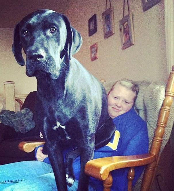 Big dog 12