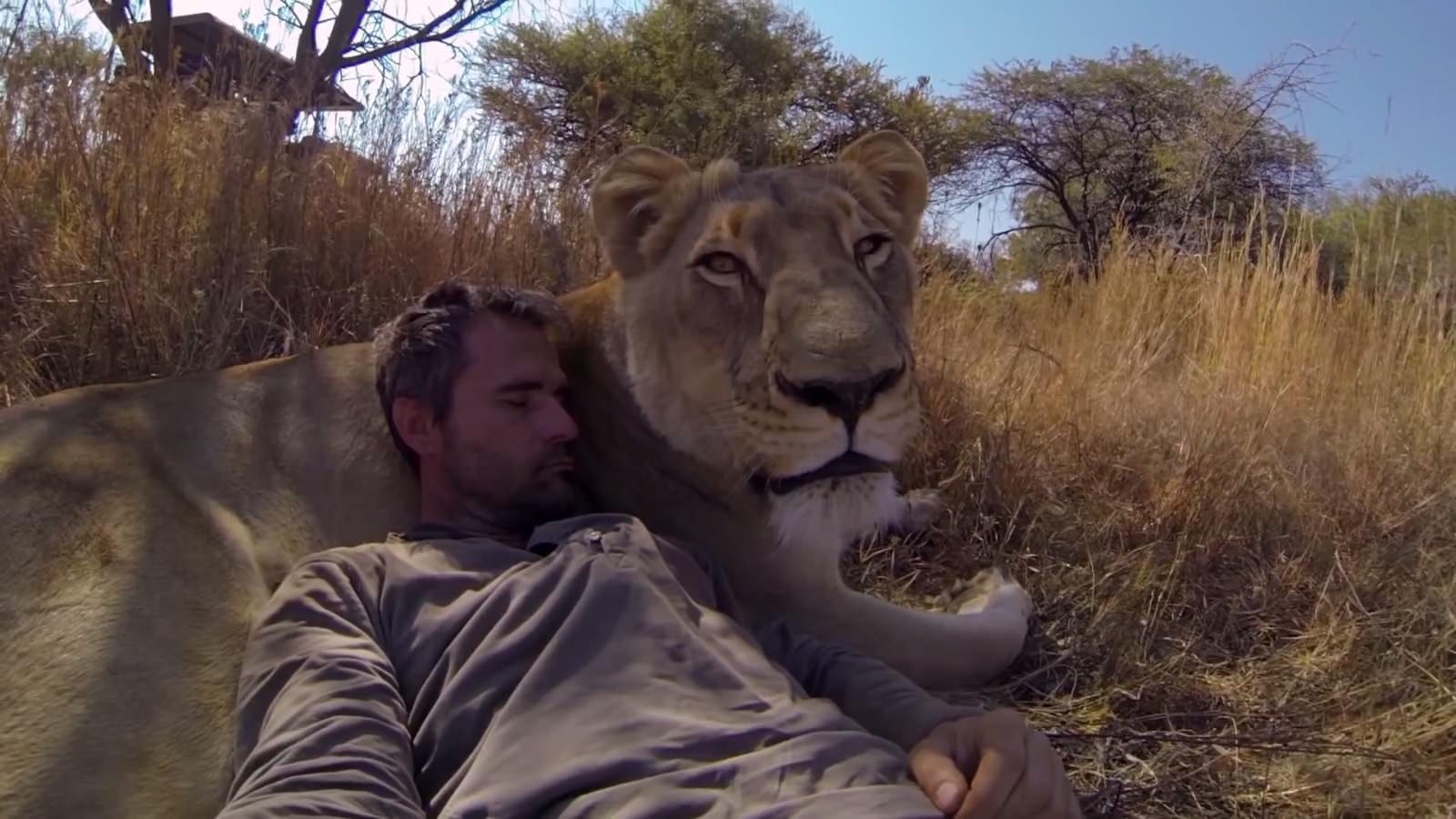 homme lion calin 2
