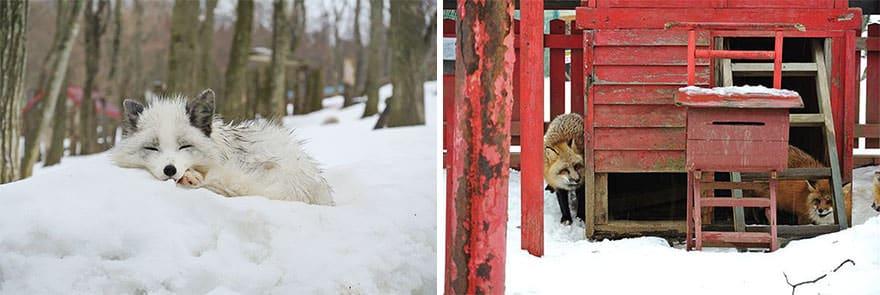 Fox village 13