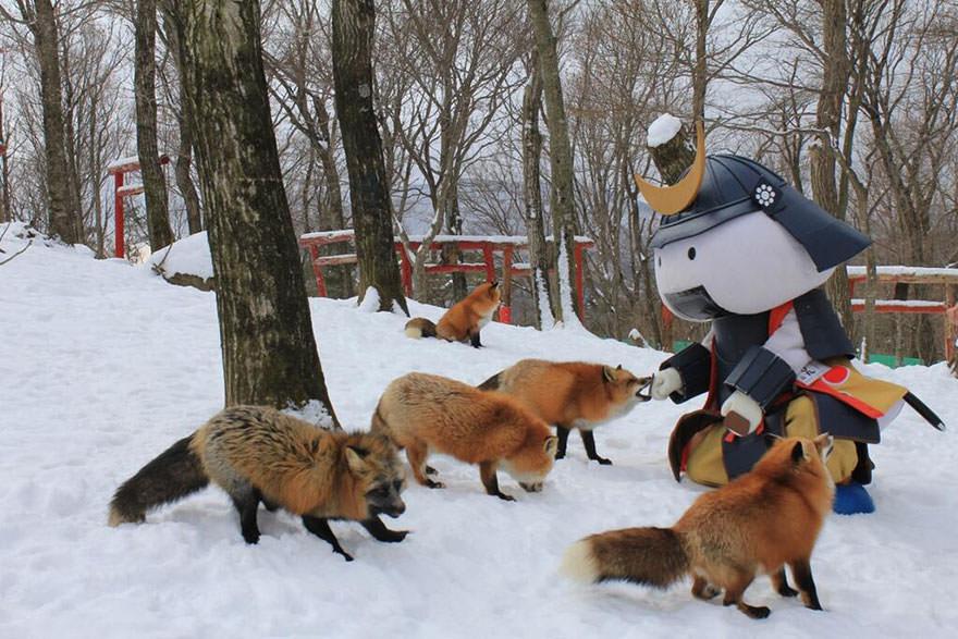 Fox village 5
