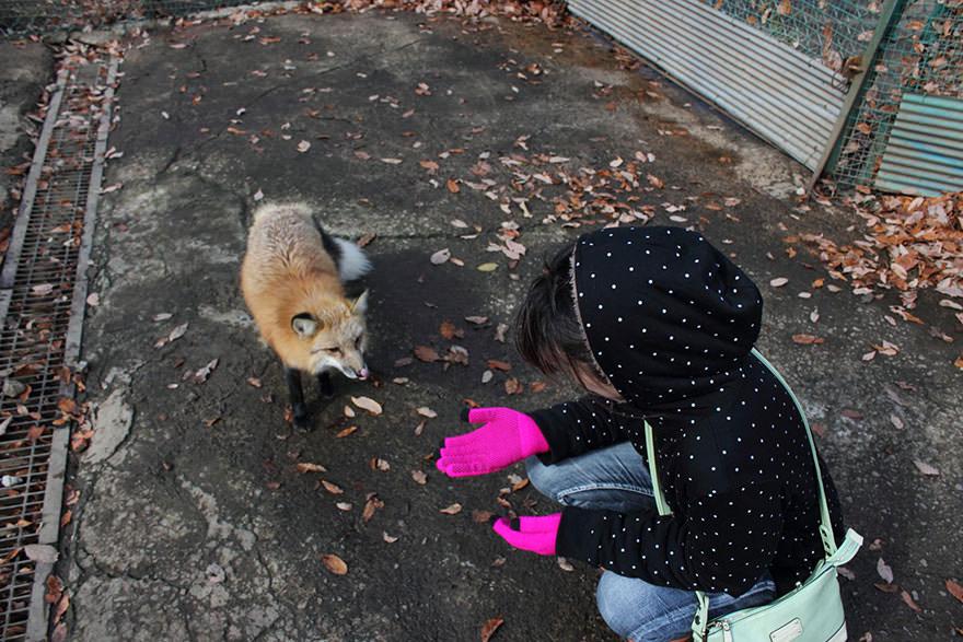 Fox village 6