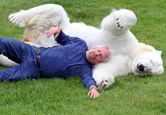 Grizzly man 2