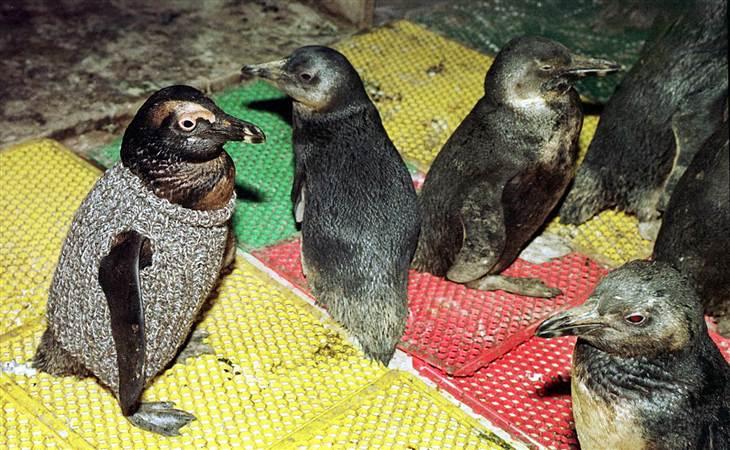 Pingouin 4