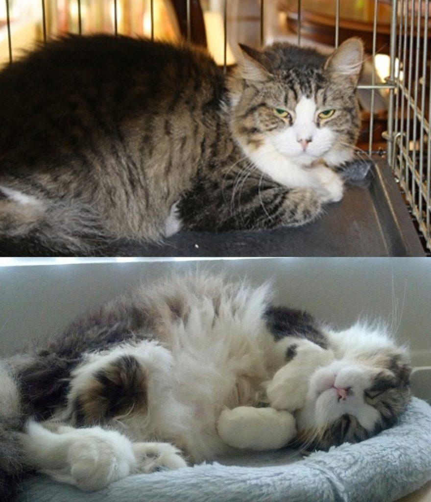 Hervorragend 29 photos avant/après l'adoption qui montrent ce que l'amour fait  XF67