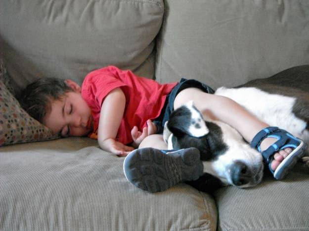 Adopter un pitbull 3