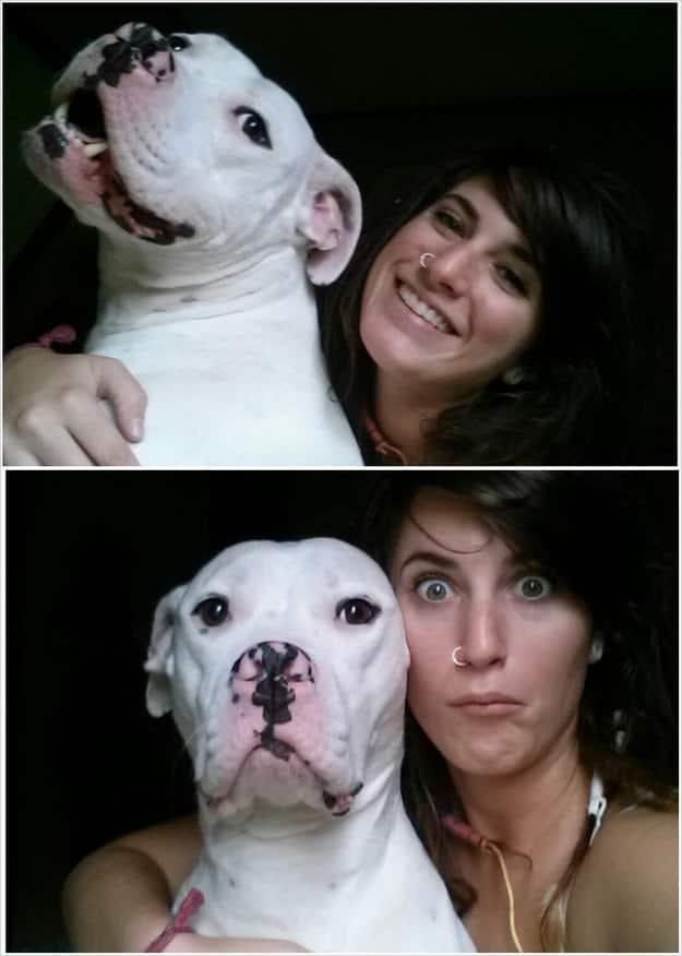 Adopter un pitbull 7