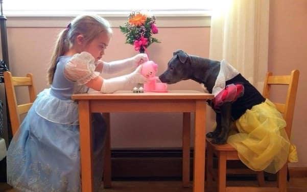 Adopter un pitbull 8