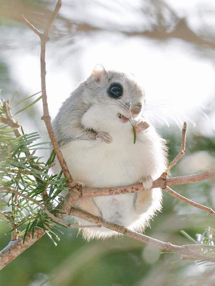 Animal de martine - 2 mars trouvé par le gros nounours et le ptit singe Animaux-hokkaido-1