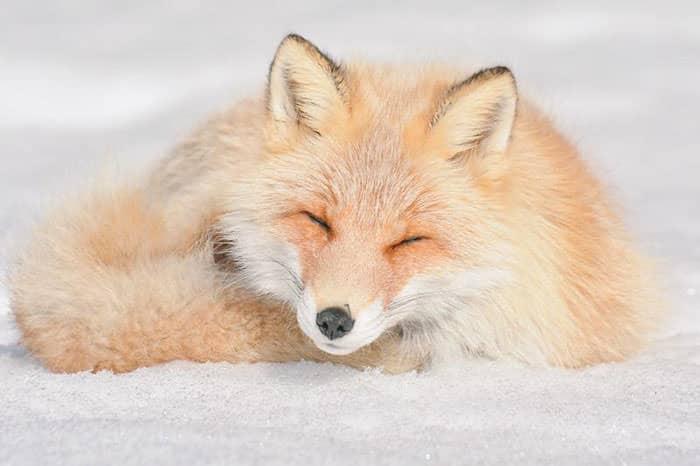 image animaux japonais
