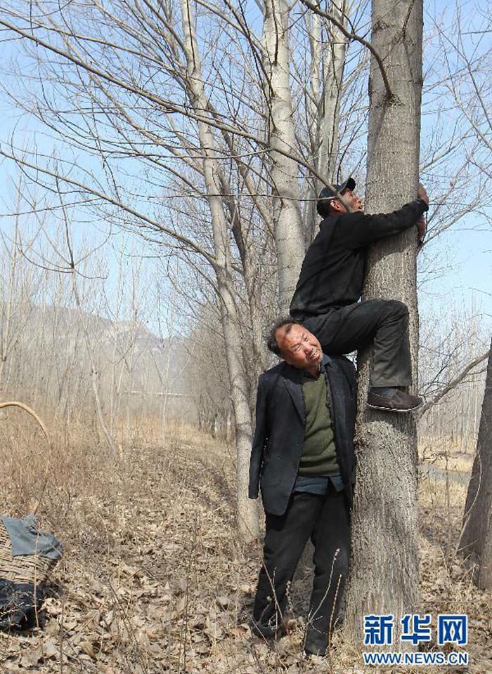 Aveugle manchot plantent arbres 9