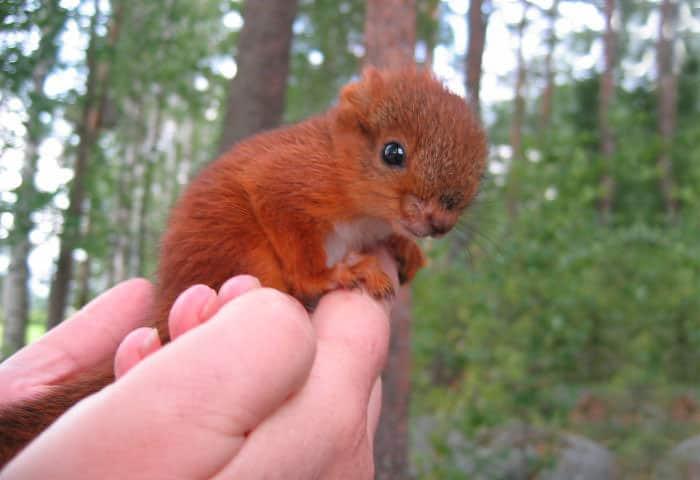Bebe ecureuil sauve 2