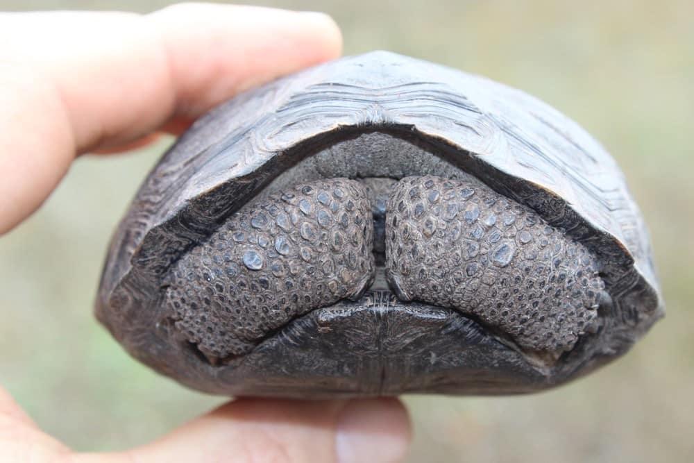 Bebes tortues galapagos 2
