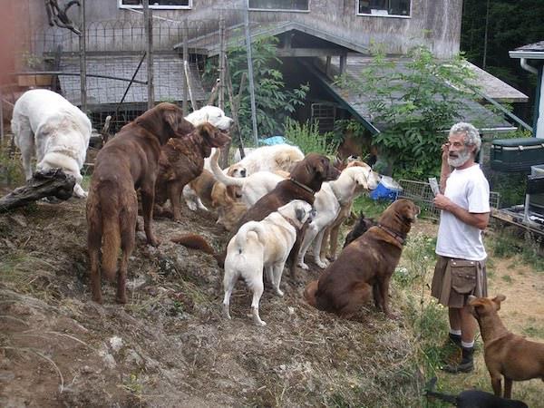 Foyer chiens maltraites 1